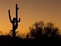 Castus Sunrise photo